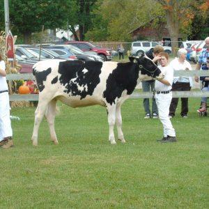 Farm Animals and Livestock Displays at Elmvale Fall Fair