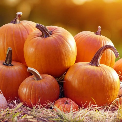 Elmvale Virtual Thanksgiving